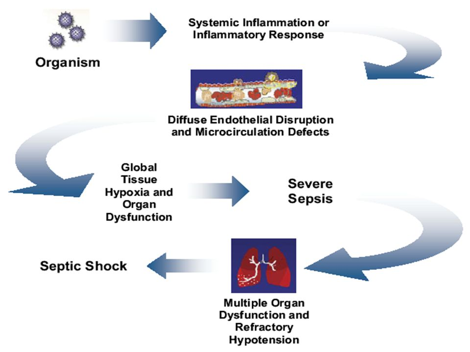 Αιμοποιητικό Σύστημα Λευκοκυττάρωση και αύξηση των ουδετερόφιλων Απελευθέρωση από τις αποθήκες του μυελού των οστών άωρων μορφών Ενεργοποίηση του συμπληρώματος C3a από την ενδοτοξίνη Αύξηση του διεγερτικού παράγοντα των αποικιών ΛευκοπενίαΜειωμένα αποθέματα των λευκοκυττάρων στο μυελό Περιφερική χρησιμοποίηση των ουδετερόφιλων Βλάβη από βακτηριακά προϊόντα Καταστολή του μυελού από φλεγμονώδεις μεσολαβητές ΣιδηροπενίαΤαχεία εισροή σιδήρου στο ήπαρ από την ενδοτοξίνη και άλλες πυρετογόνες ουσίες ΑναιμίαΔιάχυτη ενδαγγειακή πήξη Μεγάλη ενδαγγειακή αιμόλυση ΘρομβοπενίαΔιάχυτη ενδαγγειακή πήξη Προσκόλληση αιμοπεταλίων στο κατεστραμμένο μικροαγγειακό ενδοθήλιο Δράση φαρμάκων Διάχυτη ενδαγγειακή πήξη Επίδραση της ενδοτοξίνης, της καχεκτίνης ή της ιντερλευκίνης 1