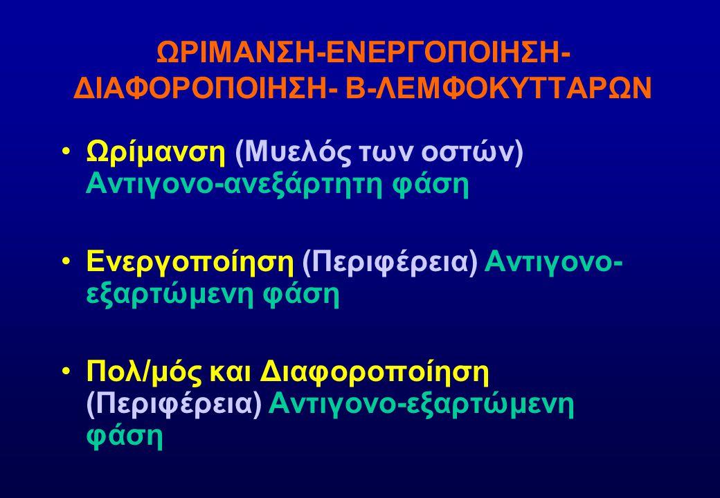 ΩΡΙΜΑΝΣΗ-ΕΝΕΡΓΟΠΟΙΗΣΗ- ΔΙΑΦΟΡΟΠΟΙΗΣΗ- Β-ΛΕΜΦΟΚΥΤΤΑΡΩΝ Ωρίμανση (Μυελός των οστών) Αντιγονο-ανεξάρτητη φάση Ενεργοποίηση (Περιφέρεια) Αντιγονο- εξαρτώμ