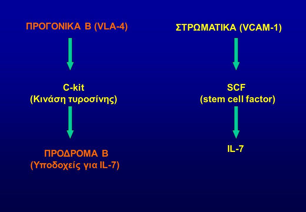 ΠΡΟΓΟΝΙΚΑ Β (VLA-4) ΣΤΡΩΜΑΤΙΚΑ (VCAM-1) C-kit (Κινάση τυροσίνης) SCF (stem cell factor) ΠΡΟΔΡΟΜΑ Β (Υποδοχείς για IL-7) IL-7