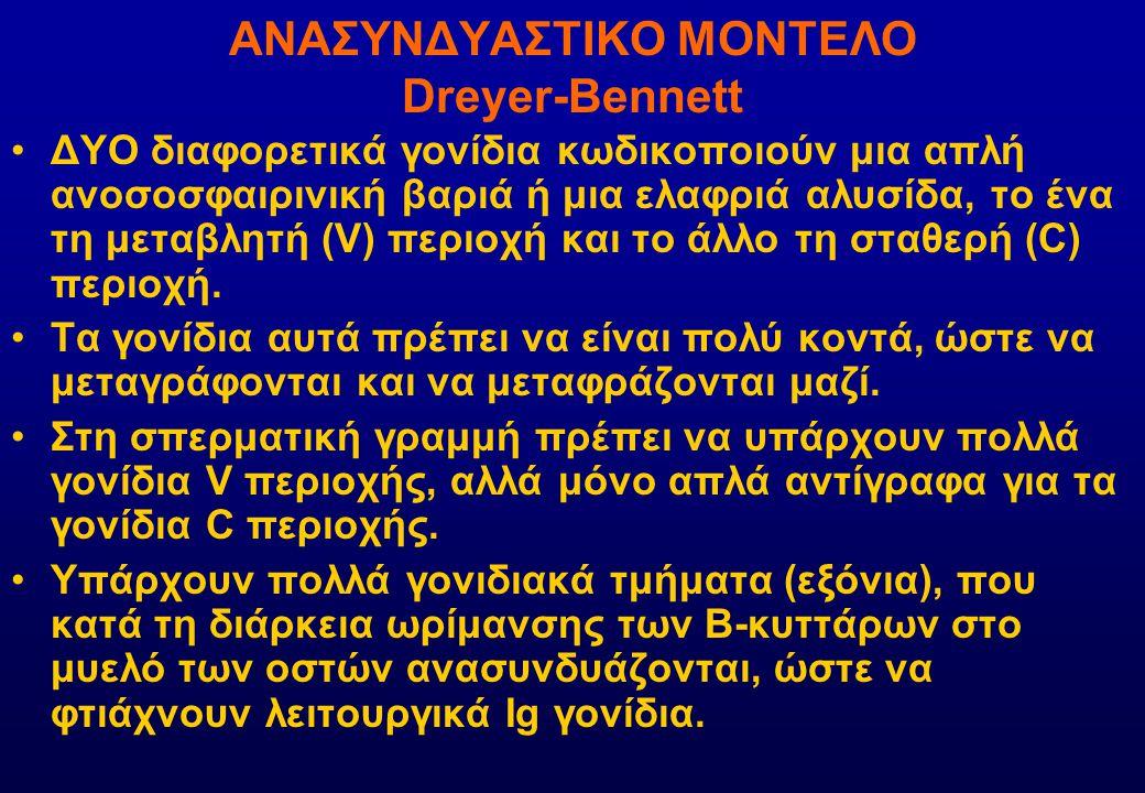 ΣΤΑΔΙΑ ΔΙΑΦΟΡΟΠΟΙΗΣΗΣ Β-ΚΥΤΤΑΡΩΝ