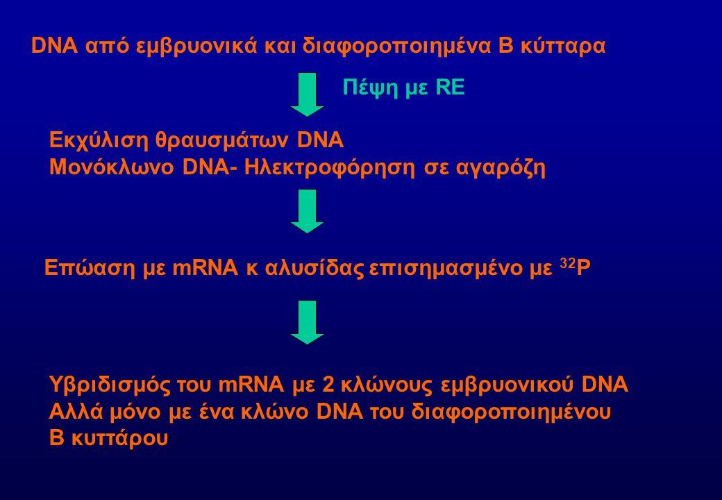 DNA από εμβρυονικά και διαφοροποιημένα Β κύτταρα Πέψη με RE Εκχύλιση θραυσμάτων DNA Μονόκλωνο DNA- Ηλεκτροφόρηση σε αγαρόζη Επώαση με mRNA κ αλυσίδας