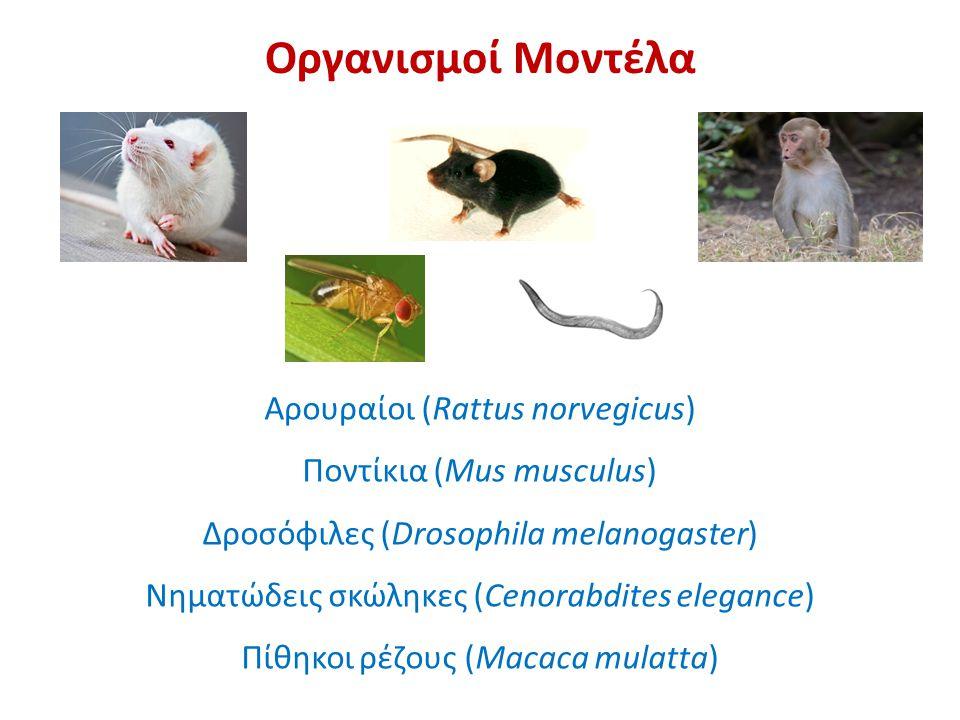 Οργανισμοί Μοντέλα Αρουραίοι (Rattus norvegicus) Ποντίκια (Mus musculus) Δροσόφιλες (Drosophila melanogaster) Νηματώδεις σκώληκες (Cenorabdites elegance) Πίθηκοι ρέζους (Macaca mulatta)