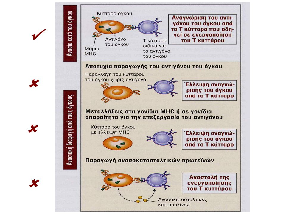 Abnormal expression of adhesion or accessory molecules Changes in T cell signal transduction molecules Anergy induction or clonal deletion of responding cells Utilization of products of tumor- stimulated leukocytes for tumor cell growth Inhibition of NK-activity by the absence of activating ligands and/or presence of inhibitory receptors Failure to express MHC antigen Induction of suppressor (regulatory) cells Occurence in immuno suppressed hosts Decrease of and heterogeneity of TAA expression Secretion of immune -downregulatory soluble factors Σύνοψη των μηχανισμών διαφυγής καρκινικών κυττάρων από την ανοσοεπιτήρηση