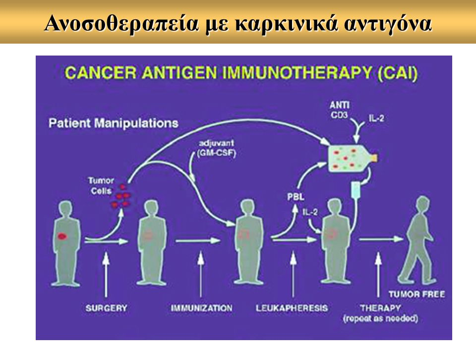 Ογκοσχετιζόμενα Ag (ΤΑΑ) ως εμβόλια Phase II study with melanoma pts Peptide used: gp-100 (209-217) Vaccine: 1.0 mg peptide in IFA, sc Protocol Vac: #1#2 in vitro assays #3 #4#5 Days: 012 + 2122 + 28 3542 +: iv injections of IL-2 every 8 h (6-10 doses) CTLmemory clinical outcome Peptide +++ - 17 % CR+PR Peptide+IL-2 + ++ 31 % CR+PR