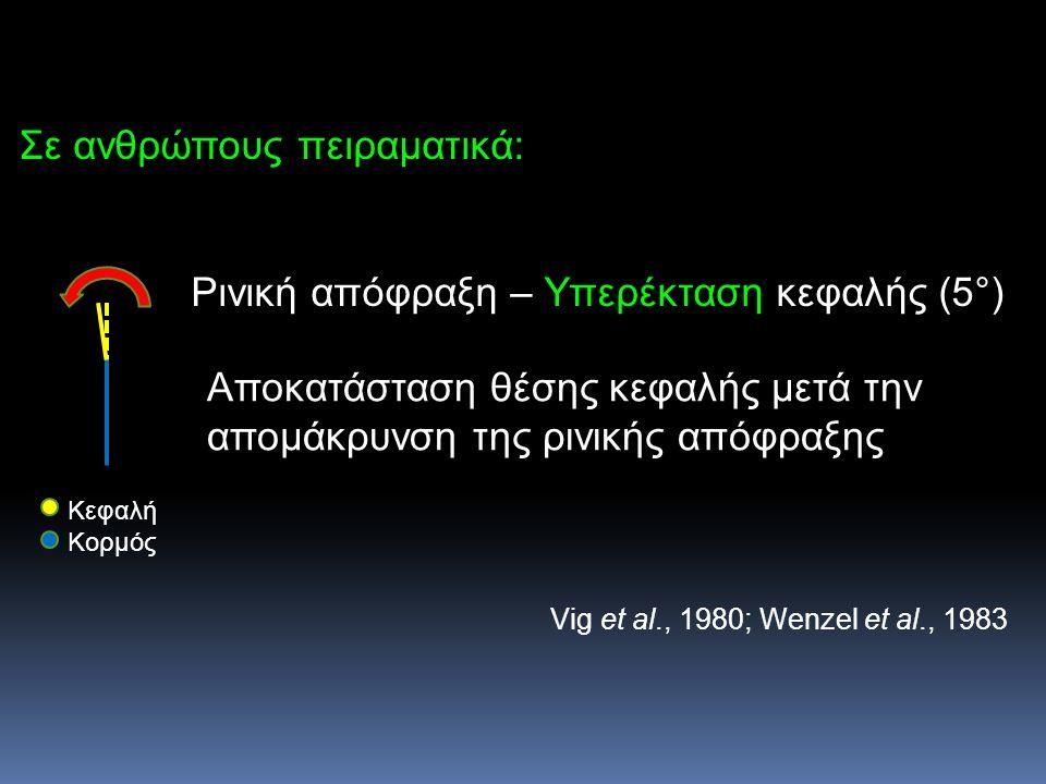 Σε ανθρώπους πειραματικά: Ρινική απόφραξη – Υπερέκταση κεφαλής (5°) Αποκατάσταση θέσης κεφαλής μετά την απομάκρυνση της ρινικής απόφραξης Vig et al.,