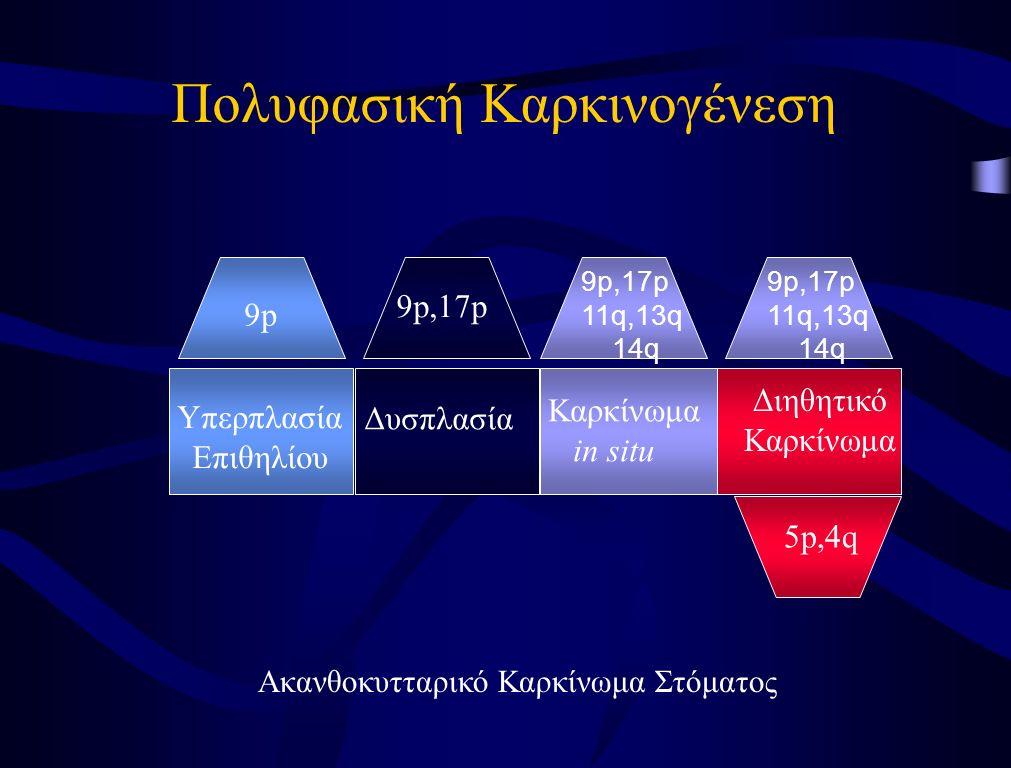 Πολυφασική Καρκινογένεση Υπερπλασία Επιθηλίου Δυσπλασία Καρκίνωμα in situ Διηθητικό Καρκίνωμα 9p 9p,17p 5p,4q 9p,17p 11q,13q 14q 9p,17p 11q,13q 14q Ακ