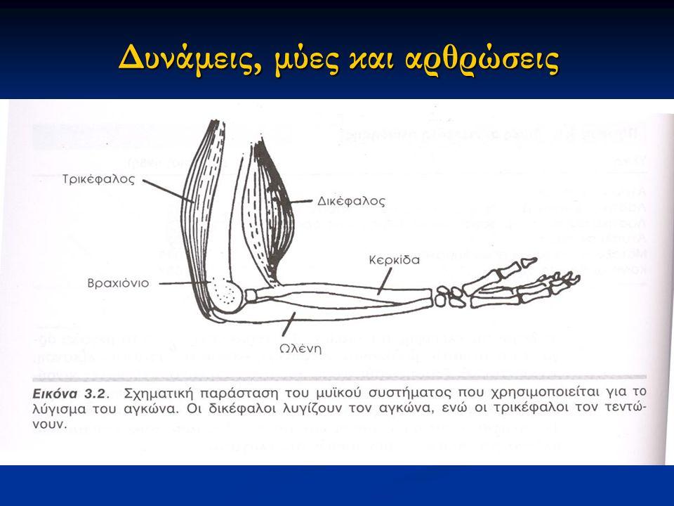 Δυνάμεις, μύες και αρθρώσεις