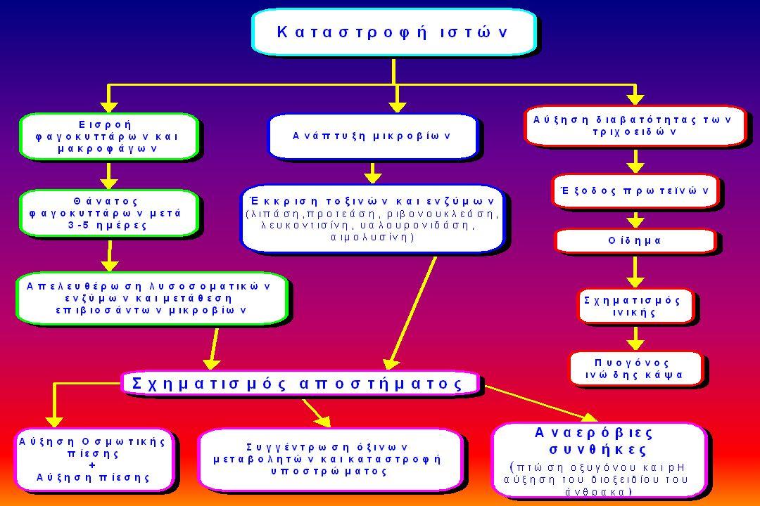Αλληλοενεργοποίησης και αναστολείς των πρωτεϊνικών συστημάτων