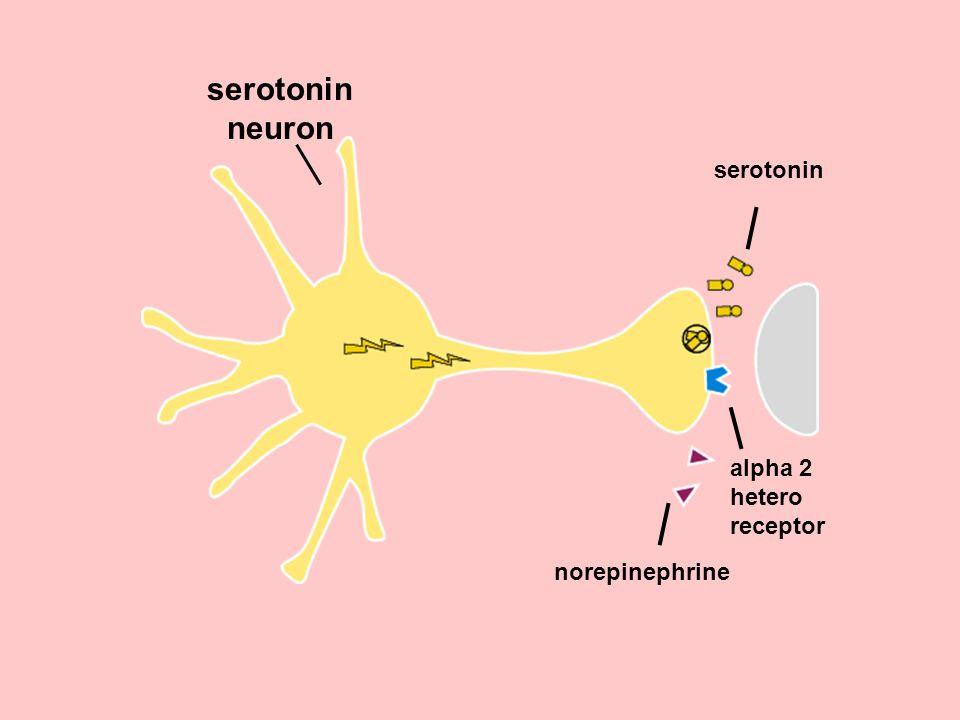 norepinephrine serotonin alpha 2 hetero receptor serotonin neuron