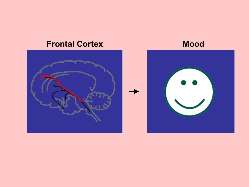 Frontal CortexMood