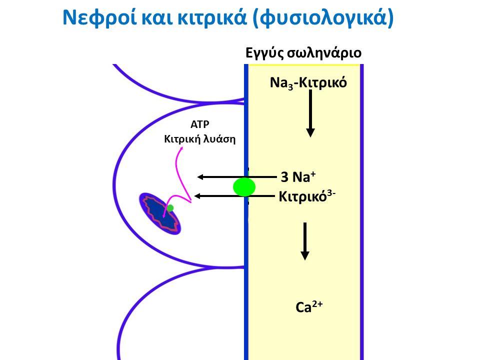 Νεφροί και κιτρικά (φυσιολογικά) ATP Κιτρική λυάση Εγγύς σωληνάριο Citrate -3 Ca +2 3 Na + Κιτρικό 3- Na 3 -Κιτρικό Ca 2+