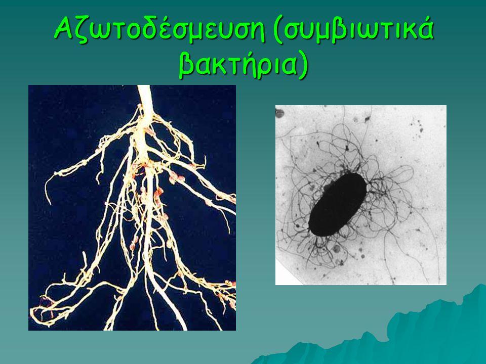 Αζωτοδέσμευση (συμβιωτικά βακτήρια)