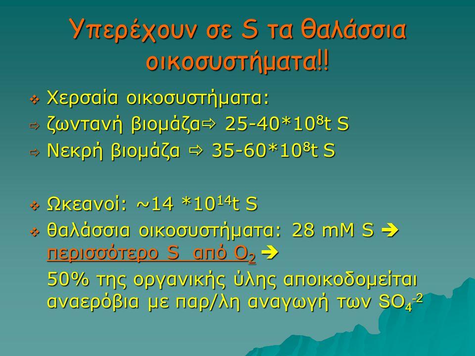 Υπερέχουν σε S τα θαλάσσια οικοσυστήματα!!  Χερσαία οικοσυστήματα:  ζωντανή βιομάζα  25-40*10 8 t S  Νεκρή βιομάζα  35-60*10 8 t S  Ωκεανοί: ~14
