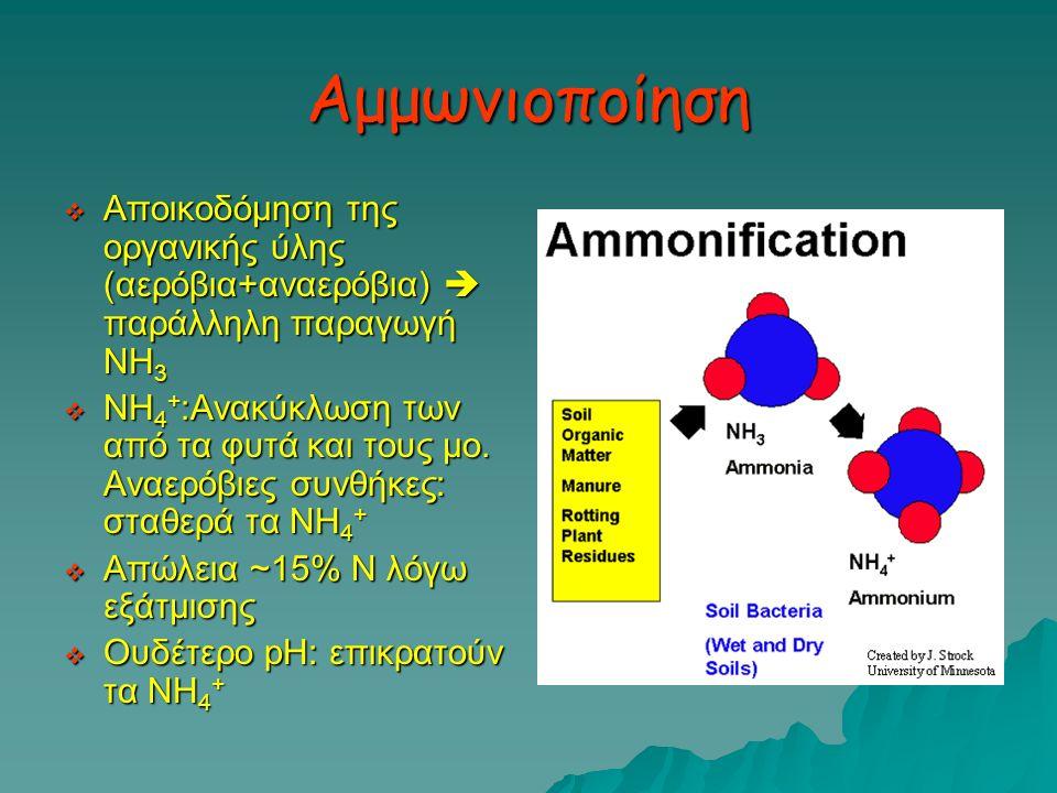 Αμμωνιοποίηση  Αποικοδόμηση της οργανικής ύλης (αερόβια+αναερόβια)  παράλληλη παραγωγή ΝΗ 3  ΝΗ 4 + :Ανακύκλωση των από τα φυτά και τους μο. Αναερό
