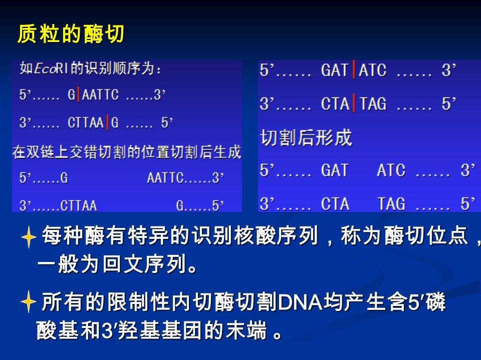 每种酶有特异的识别核酸序列,称为酶切位点, 一般为回文序列。 每种酶有特异的识别核酸序列,称为酶切位点, 一般为回文序列。 所有的限制性内切酶切割 DNA 均产生含 5′ 磷 酸基和 3′ 羟基基团的末端 。 所有的限制性内切酶切割 DNA 均产生含 5′ 磷 酸基和 3′ 羟基基团的末端 。 质粒