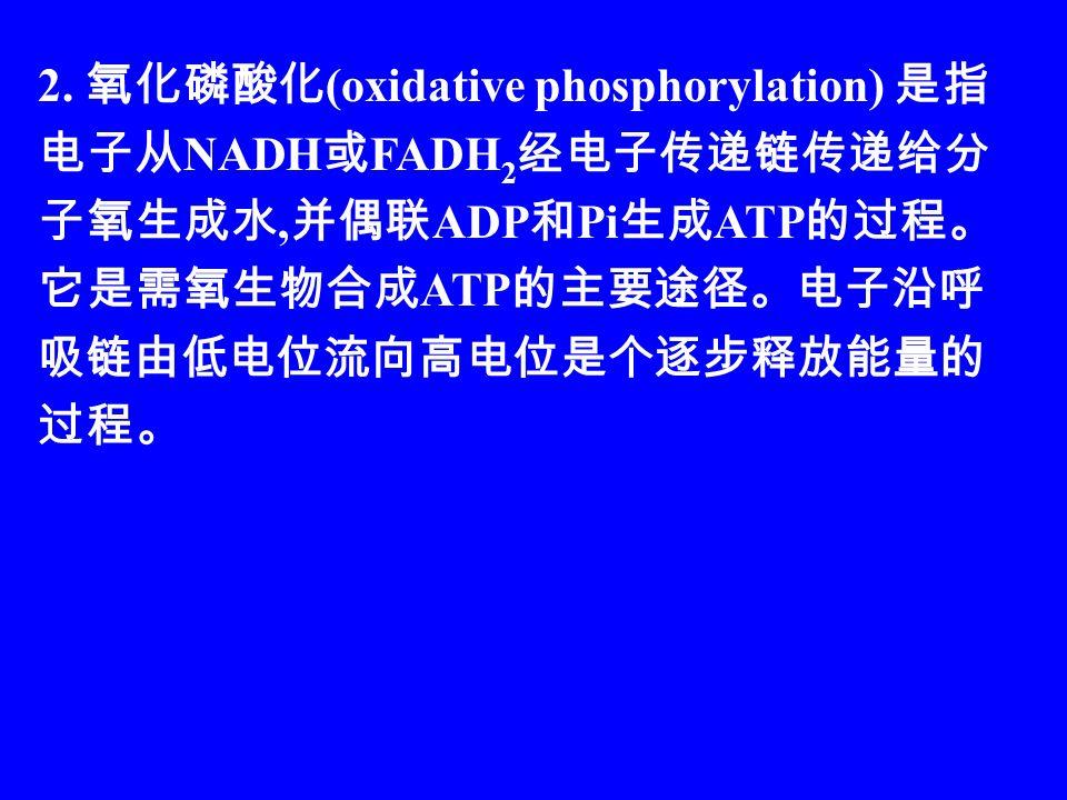 2. 氧化磷酸化 (oxidative phosphorylation) 是指 电子从 NADH 或 FADH 2 经电子传递链传递给分 子氧生成水, 并偶联 ADP 和 Pi 生成 ATP 的过程。 它是需氧生物合成 ATP 的主要途径。电子沿呼 吸链由低电位流向高电位是个逐步释放能量的 过程。