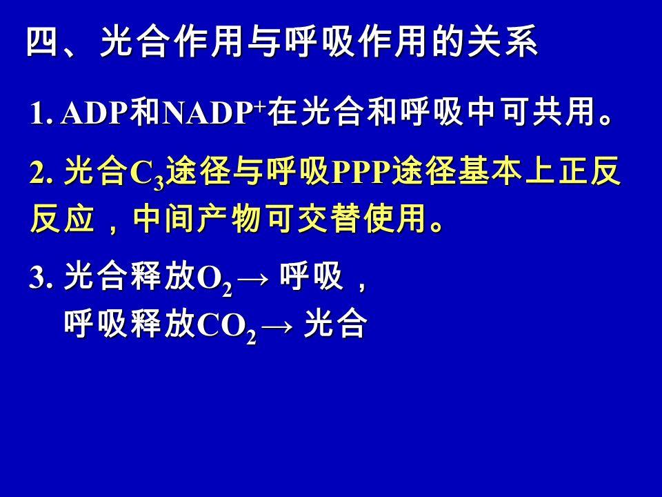 四、光合作用与呼吸作用的关系 1.ADP 和 NADP + 在光合和呼吸中可共用。 2. 光合 C 3 途径与呼吸 PPP 途径基本上正反 反应,中间产物可交替使用。 3.