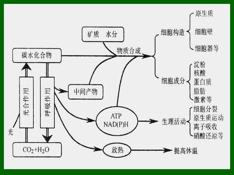  在高等植物中以这种形式形成的 ATP 只占一小 部分,糖酵解过程中有两个步骤发生底物水平 磷酸化:  (1) 甘油醛 -3- 磷酸被氧化脱氢,生成一个高能 硫酯键,再转化为高能磷酸键,其磷酸基团再 转移到 ADP 上,形成 ATP 。  (2) 2- 磷酸甘油酸通过烯醇酶的作用,脱水生 成高能中间化合物 (PEP) ,经激酶催化转移磷 酸基团到 ADP 上,生成 ATP 。  在 TCA 循环中,由琥珀酰 CoA 形成琥珀酸时通 过底物水平磷酸化生成 ATP 。