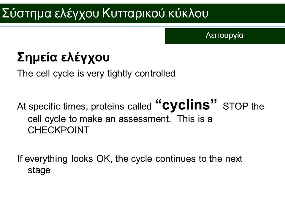 """Σύστημα ελέγχου Κυτταρικού κύκλου Λειτουργία Σημεία ελέγχου The cell cycle is very tightly controlled At specific times, proteins called """"cyclins"""" STO"""