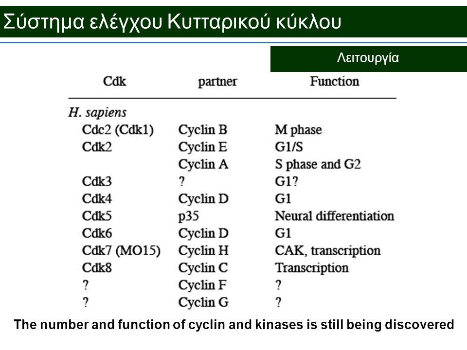 Σύστημα ελέγχου Κυτταρικού κύκλου Λειτουργία The number and function of cyclin and kinases is still being discovered