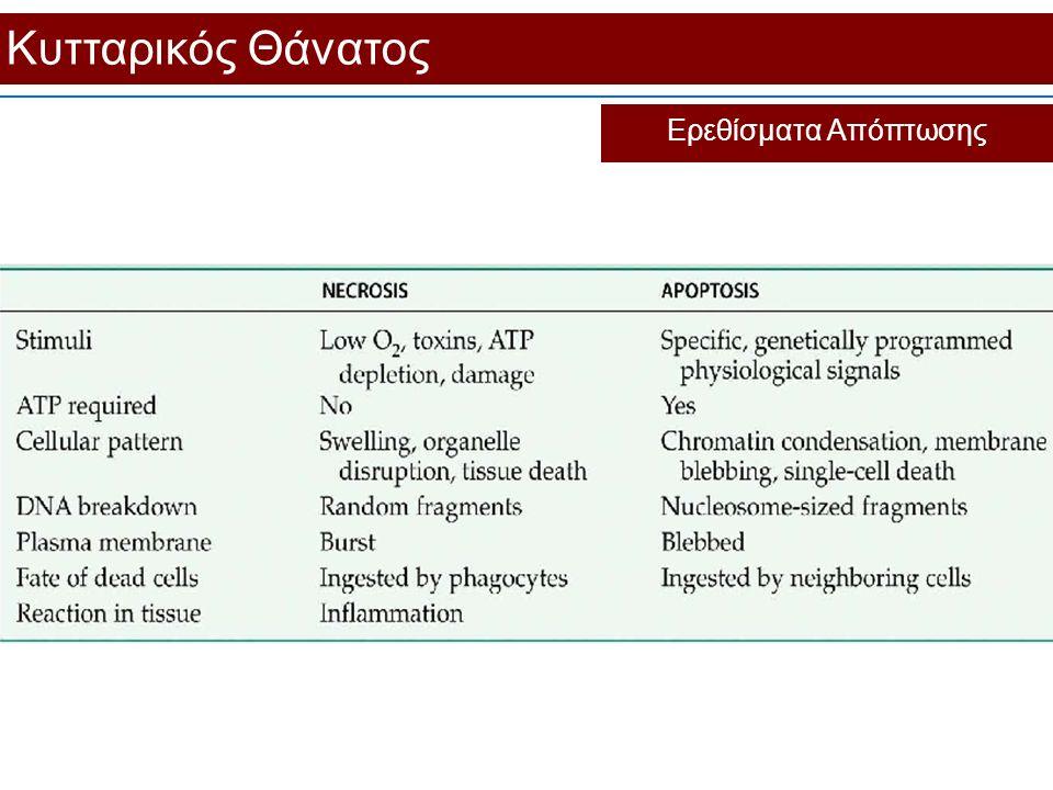 Κυτταρικός Θάνατος Ερεθίσματα Απόπτωσης