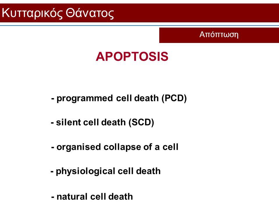 Κυτταρικός Θάνατος Απόπτωση APOPTOSIS - natural cell death - programmed cell death (PCD) - silent cell death (SCD) - organised collapse of a cell - ph