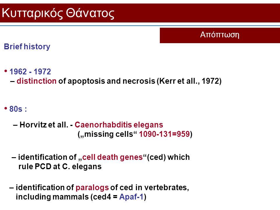 Κυτταρικός Θάνατος Απόπτωση Brief history 80s : 1962 - 1972 – distinction of apoptosis and necrosis (Kerr et all., 1972) – identification of paralogs