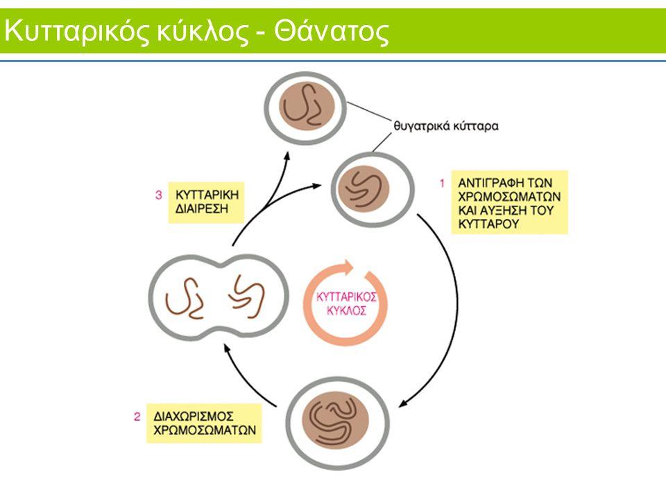 Κυτταρικός κύκλος - Θάνατος