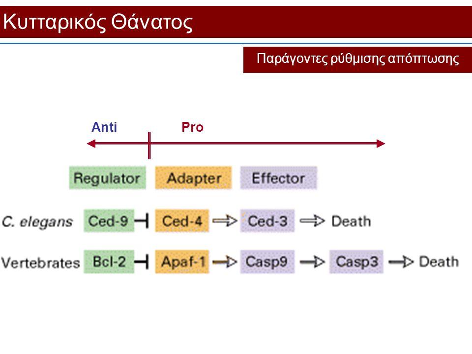 Κυτταρικός Θάνατος Παράγοντες ρύθμισης απόπτωσης AntiPro