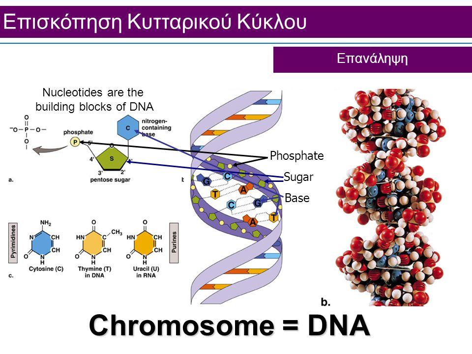 Επισκόπηση Κυτταρικού Κύκλου Επανάληψη Chromosome = DNA Nucleotides are the building blocks of DNA Phosphate Sugar Base