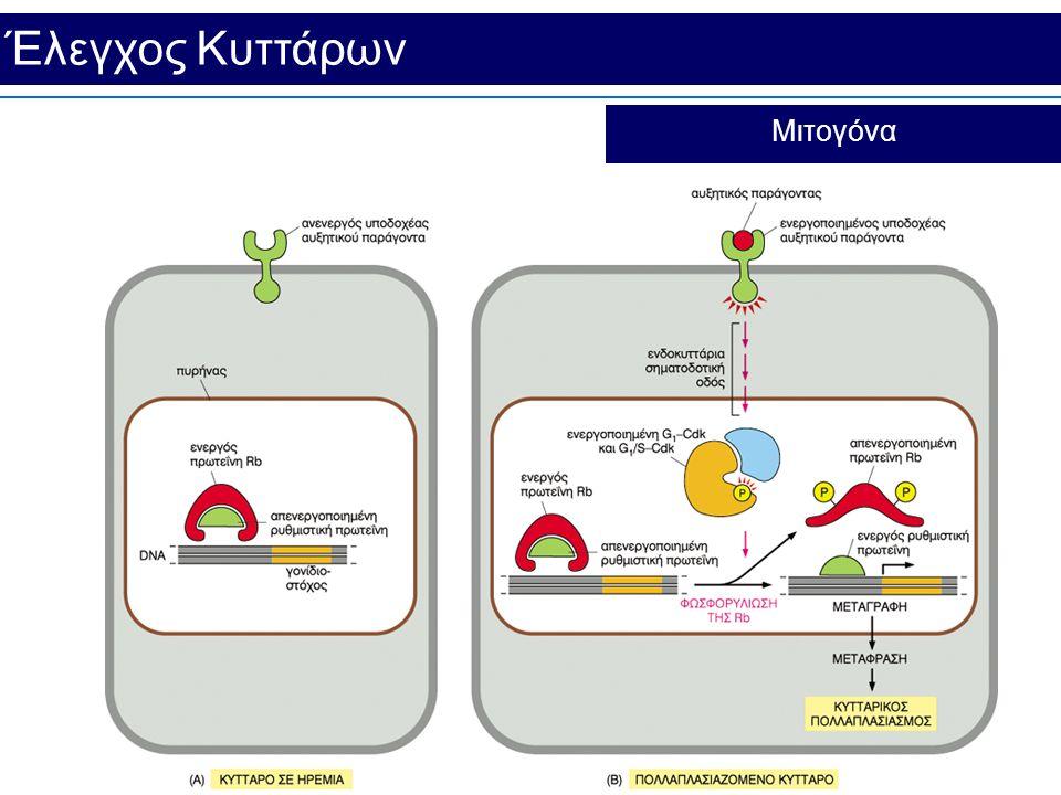 Έλεγχος Κυττάρων Μιτογόνα