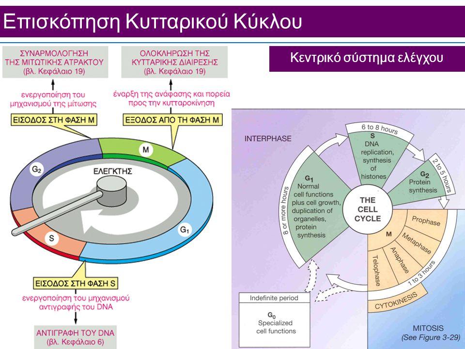 Επισκόπηση Κυτταρικού Κύκλου Κεντρικό σύστημα ελέγχου