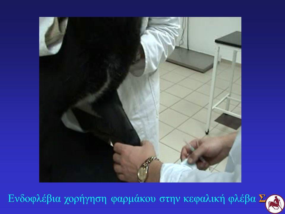 Σ Ενδοφλέβια χορήγηση φαρμάκου στην κεφαλική φλέβα Σ