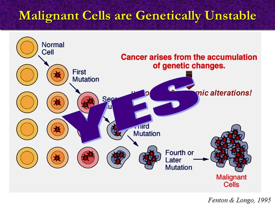 Malignant Cells are Genetically Unstable up to 11,000 genomic alterations! Fenton & Longo, 1995