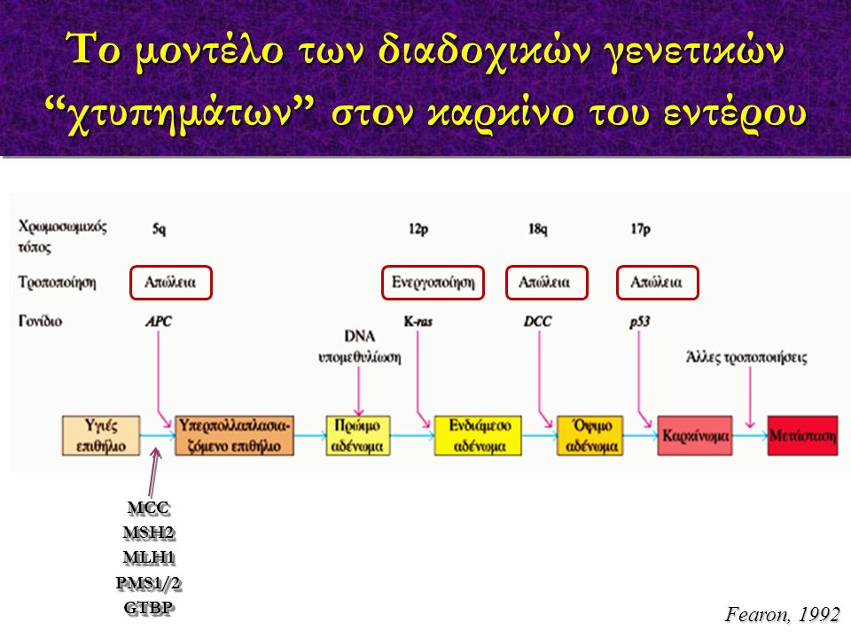 """Το μοντέλο των διαδοχικών γενετικών """"χτυπημάτων"""" στον καρκίνο του εντέρου MCCMSH2MLH1PMS1/2GTBPMCCMSH2MLH1PMS1/2GTBP Fearon, 1992"""