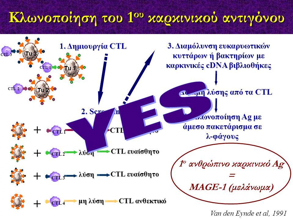 Κλωνοποίηση του 1 ου καρκινικού αντιγόνου Van den Eynde et al, 1991 CTL 2 CTL 1 Τu 1 Τu 3 Τu 2 CTL 3 1. Δημιουργία CTL CTL 1 + CTL 2 + CTL 3 + CTL 4 +