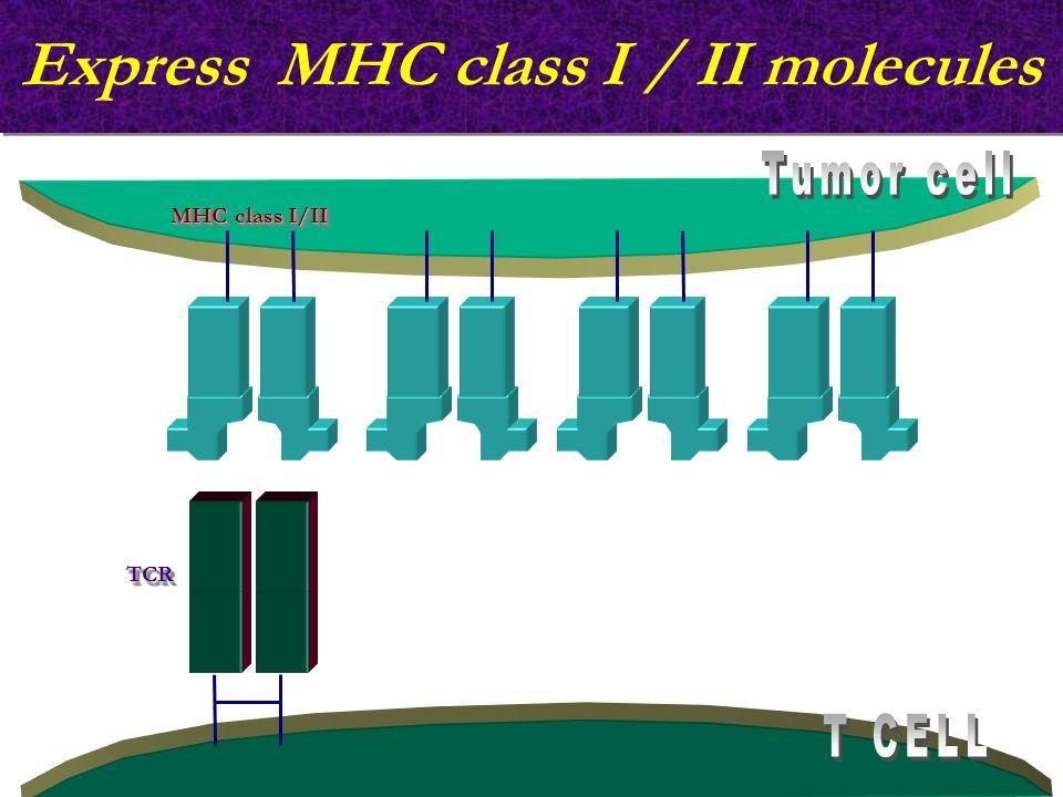 Express MHC class I / II molecules MHC class I/II TCRTCR