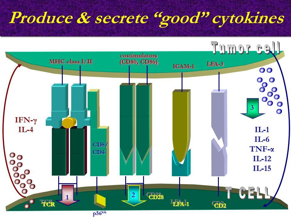 Produce & secrete good cytokines TCRTCR 1 2 p56 lck IL-1IL-6 TNF-α IL-12 IL-15 LFA-1LFA-1 CD2CD2 ICAM-1ICAM-1 LFA-3LFA-3 CD28CD28 IFN-γ IL-4 MHC class I/II costimulators (CD80, CD86) costimulators CD8/CD4 3