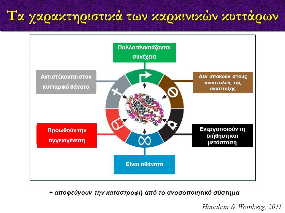 Τα χαρακτηριστικά των καρκινικών κυττάρων Αντιστέκονται στον κυτταρικό θάνατο Προωθούν την αγγειογένεση Πολλαπλασιάζονται συνέχεια Είναι αθάνατα Δεν υ