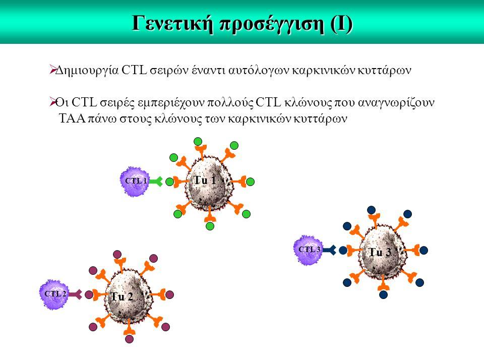 Γενετική προσέγγιση (Ι)  Δημιουργία CTL σειρών έναντι αυτόλογων καρκινικών κυττάρων  Οι CTL σειρές εμπεριέχουν πολλούς CTL κλώνους που αναγνωρίζουν ΤΑΑ πάνω στους κλώνους των καρκινικών κυττάρων CTL 2 CTL 3 CTL 1 Τu 1 Τu 3 Τu 2