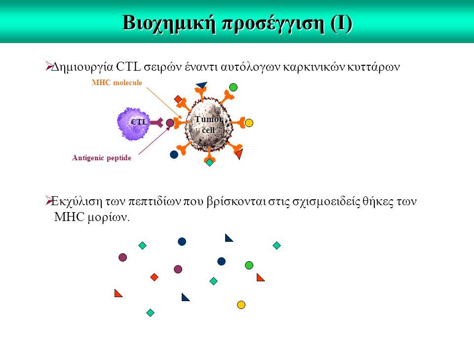 Βιοχημική προσέγγιση (Ι)  Δημιουργία CTL σειρών έναντι αυτόλογων καρκινικών κυττάρων CTL Τumor cell  Εκχύλιση των πεπτιδίων που βρίσκονται στις σχισμοειδείς θήκες των MHC μορίων.