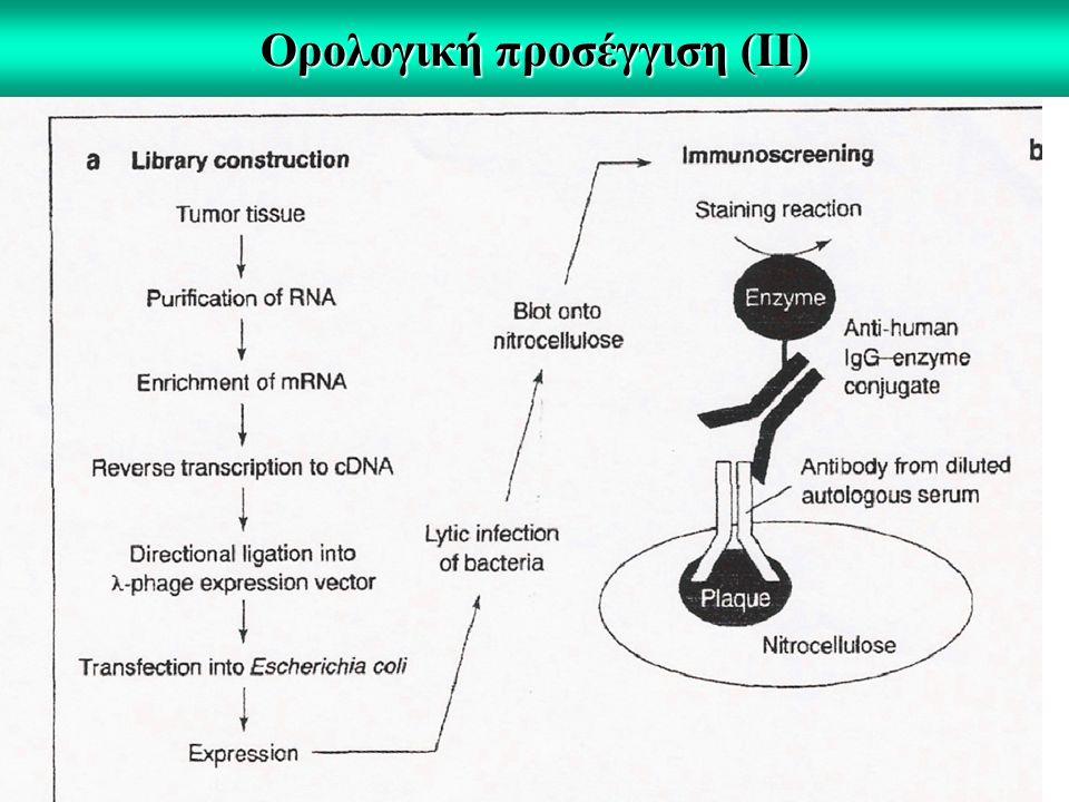 Ορολογική προσέγγιση (II)