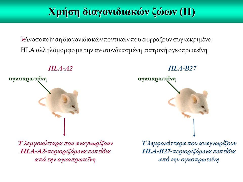 Χρήση διαγονιδιακών ζώων (ΙΙ)  Ανοσοποίηση διαγονιδιακών ποντικών που εκφράζουν συγκεκριμένο HLA αλληλόμορφο με την ανασυνδυασμένη πατρική ογκοπρωτεΐνη HLA-A2HLA-B27 ογκοπρωτεΐνηογκοπρωτεΐνη Τ λεμφοκύτταρα που αναγνωρίζουν HLA-A2-περιοριζόμενα πεπτίδια από την ογκοπρωτεΐνη Τ λεμφοκύτταρα που αναγνωρίζουν HLA-B27-περιοριζόμενα πεπτίδια από την ογκοπρωτεΐνη