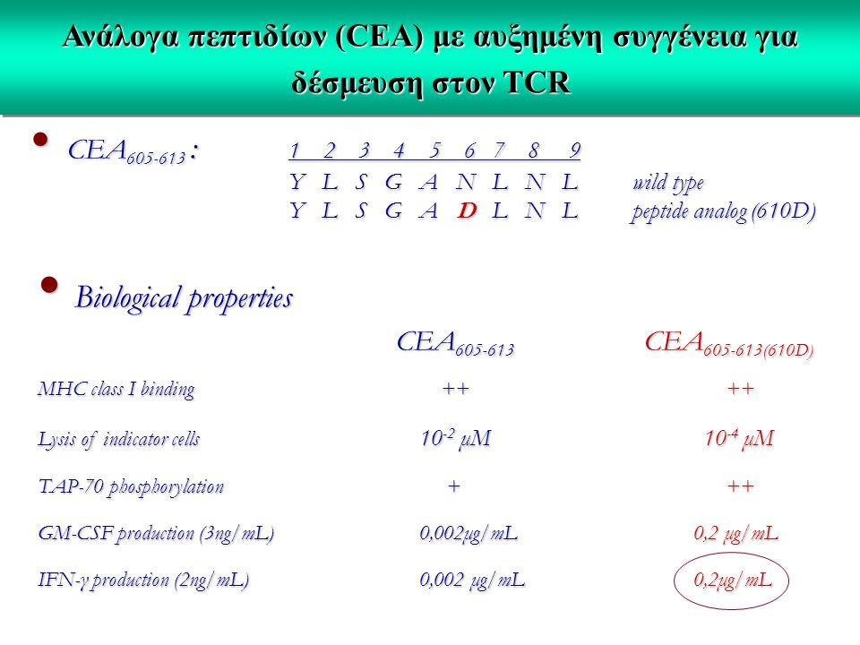 Ανάλογα πεπτιδίων (CEA) με αυξημένη συγγένεια για δέσμευση στον TCR CEA 605-613 : 1 2 3 4 5 6 7 8 9 CEA 605-613 : 1 2 3 4 5 6 7 8 9 Y L S G A N L N Lwild type Y L S G A N L N Lwild type Y L S G A D L N L peptide analog (610D) Biological properties Biological properties CEA 605-613 CEA 605-613(610D) CEA 605-613 CEA 605-613(610D) MHC class I binding ++++ Lysis of indicator cells 10 -2 μM 10 -4 μM TAP-70 phosphorylation +++ GM-CSF production (3ng/mL) 0,002μg/mL 0,2 μg/mL IFN-γ production (2ng/mL) 0,002 μg/mL 0,2μg/mL