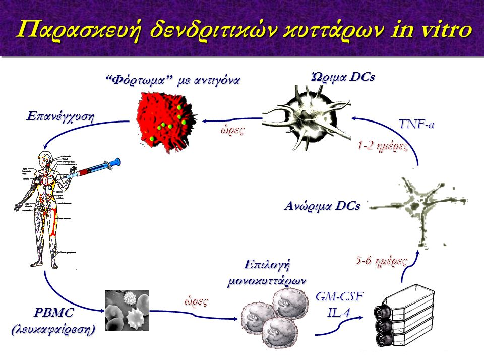Επιλογή μονοκυττάρων GM-CSFIL-4 Ανώριμα DCs TNF-α Φόρτωμα με αντιγόνα Ώριμα DCs PBMC (λευκαφαίρεση) Επανέγχυση Παρασκευή δενδριτικών κυττάρων in vitro 5-6 ημέρες 1-2 ημέρες ώρες ώρες