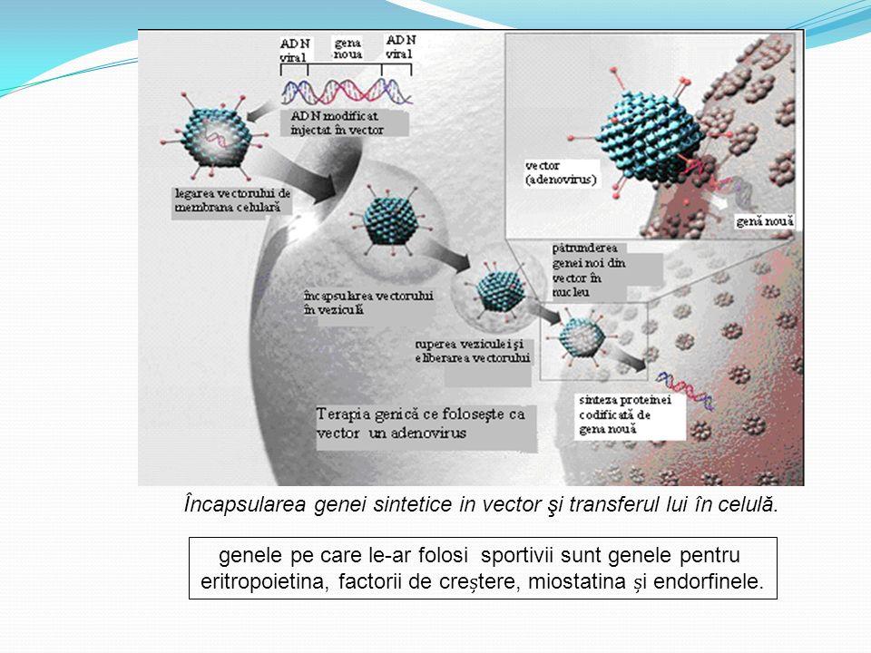Încapsularea genei sintetice in vector şi transferul lui în celulă. genele pe care le-ar folosi sportivii sunt genele pentru eritropoietina, factorii