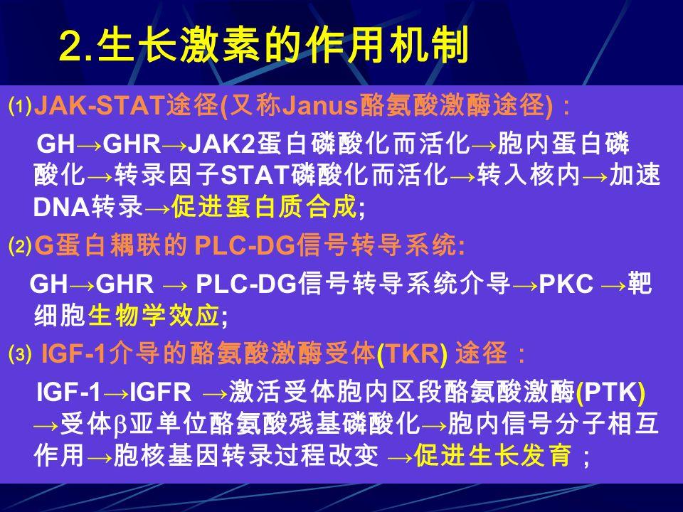 2. 生长激素的作用机制 ⑴ JAK-STAT 途径 ( 又称 Janus 酪氨酸激酶途径 ) : GH→GHR→JAK2 蛋白磷酸化而活化 → 胞内蛋白磷 酸化 → 转录因子 STAT 磷酸化而活化 → 转入核内 → 加速 DNA 转录 → 促进蛋白质合成 ; ⑵ G 蛋白耦联的 PLC-DG 信