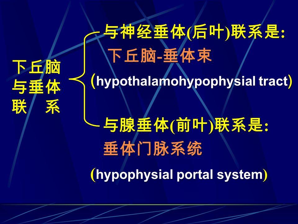 与神经垂体 ( 后叶 ) 联系是 : 下丘脑 - 垂体束 ( hypothalamohypophysial tract ) 与腺垂体 ( 前叶 ) 联系是 : 垂体门脉系统 ( hypophysial portal system ) 与神经垂体 ( 后叶 ) 联系是 : 下丘脑 - 垂体束 ( hy