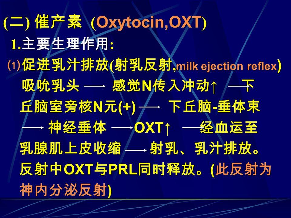 ( 二 ) 催产素 ( Oxytocin,OXT ) 1. 主要生理作用 : ⑴促进乳汁排放 ( 射乳反射, milk ejection reflex ) 吸吮乳头 感觉 N 传入冲动 ↑ 下 丘脑室旁核 N 元 (+) 下丘脑 - 垂体束 神经垂体 OXT↑ 经血运至 乳腺肌上皮收缩 射乳、乳汁排