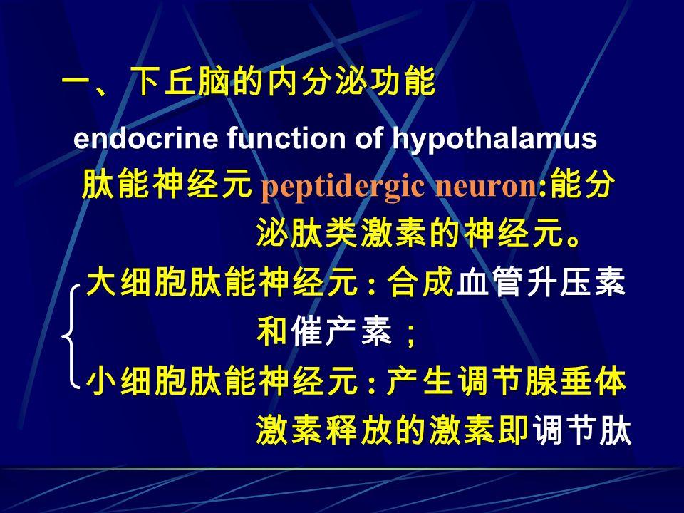 一、下丘脑的内分泌功能 endocrine function of hypothalamus 肽能神经元 peptidergic neuron: 能分 泌肽类激素的神经元。 大细胞肽能神经元 : 合成血管升压素 和催产素; 小细胞肽能神经元 : 产生调节腺垂体 激素释放的激素即调节肽 一、下丘脑的内